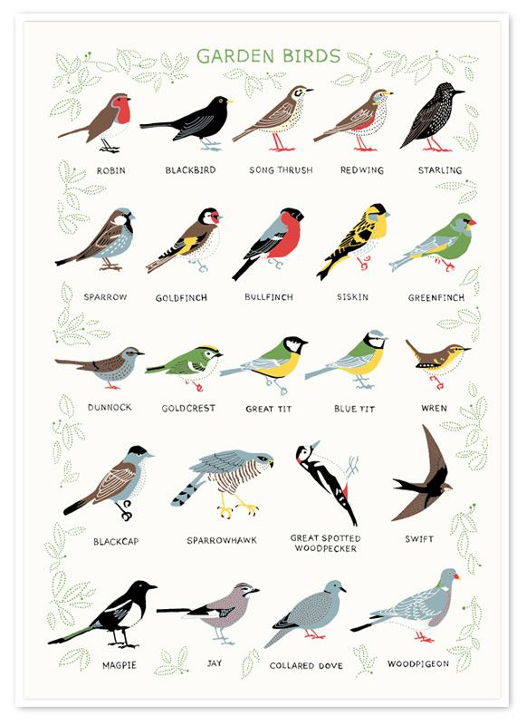 17 Best images about BIRDS ILLUSTRATION on Pinterest Bird