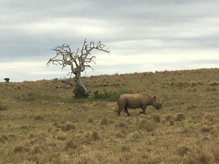 Got to see the elusive Black Rhino at the Addo Elephant National Park