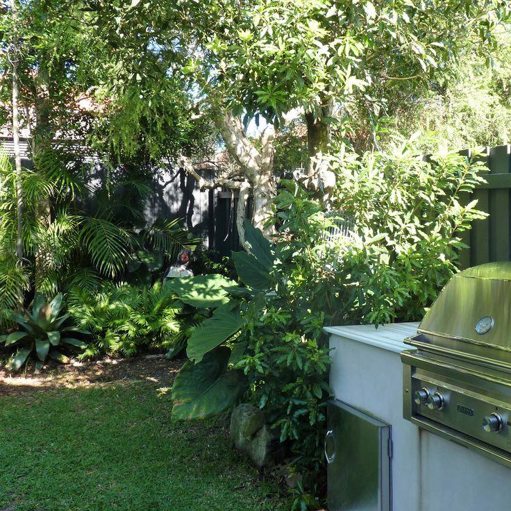 North Bondi foliage garden
