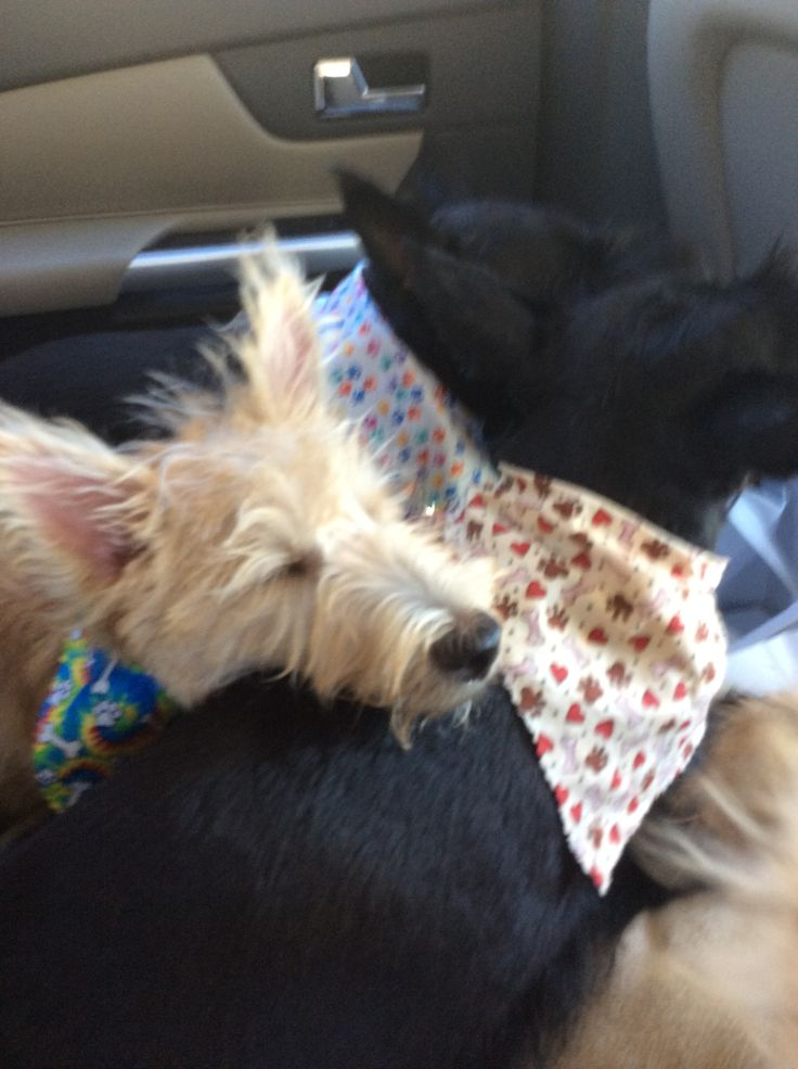 helpful tips traveling with pets