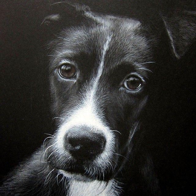 My drawing of the sad dog (white and brown watercolor pencils). Рисунок собаки (белый и коричневый акварельные карандаши) #murkaart ##Nationalpuppyday
