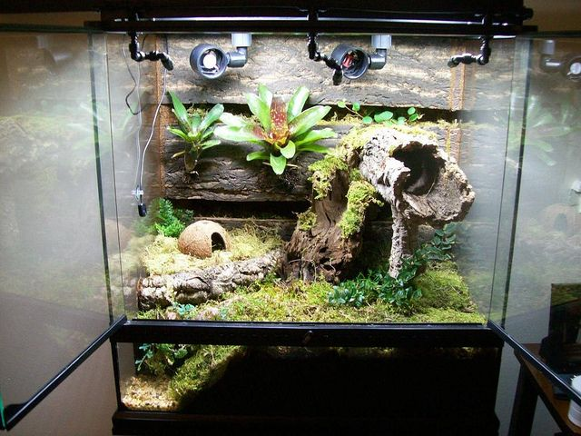 New Frog Vivarium Build By Nickerson Kevin The Hydra