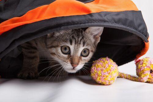 Los gatos necesitan al menos 30 minutos de juegos diarios; así fomentarás el ejercicio físico y evitarás que se convierta en un gato sedentario.