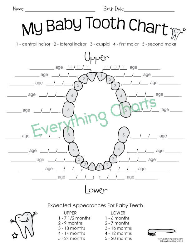 17 Best ideas about Tooth Chart on Pinterest   Baby teething chart ...