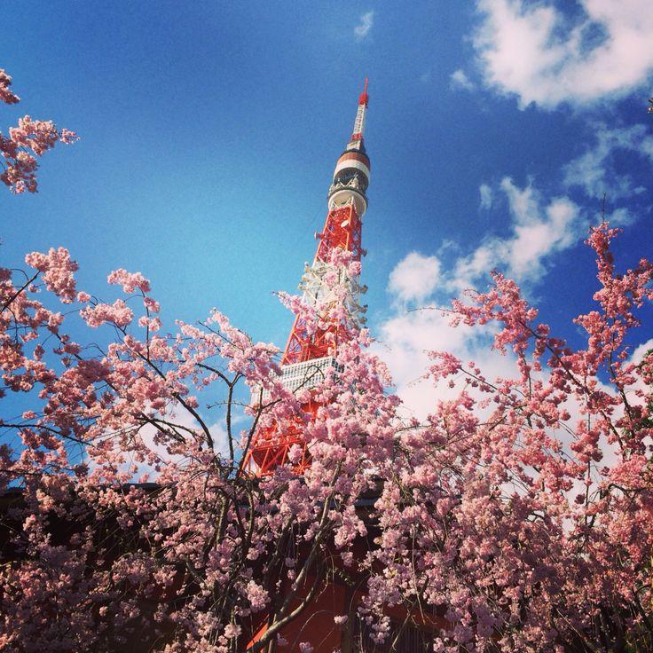 tokyo 桜