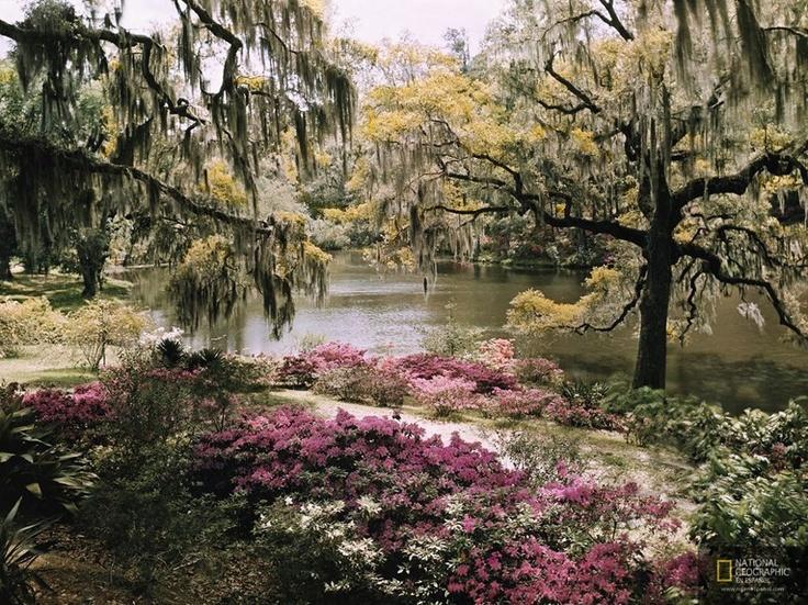 Foto del día | Charleston, Carolina del Sur. Por: B. Anthony Stewart (Tomada en 1940)    NAT GEO