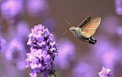 Vroege Vogels: Tipvideo: Meer vlinders in de tuin