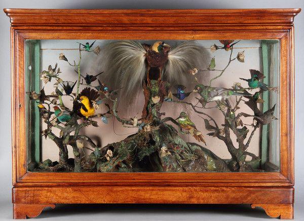 Hummingbird Cabinet Natural History Museum