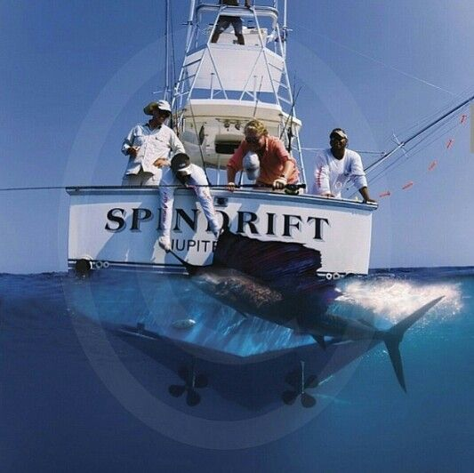 494 best saltwater fishing images on pinterest saltwater for Saltwater fishing in florida