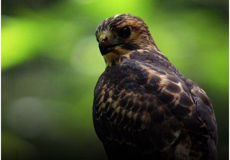 Observez les oiseaux à Puerto Rico
