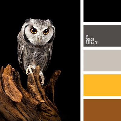 древесный цвет, оттенки специй, палитра цветов, подбор цвета, подбор цвета в интерьере, серый, темно серый, цвет апельсина, цвет дерева, цвет мокрого асфальта, цвет специй, цвет шафрана, черный, шафрановый, яркий желтый.