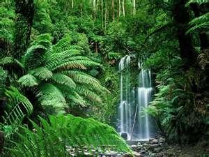 Waterfall, Victoria, Australia