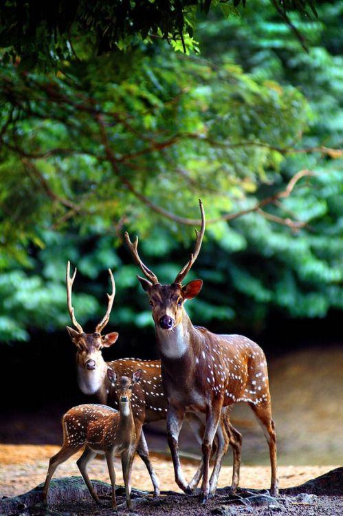 helloo deer