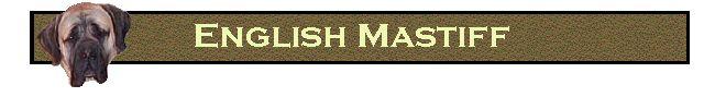 English Mastiff Breeders - http://www.windsorsprings.com/ http://www.windsorsprings.com/english-mastiffs-breeders/