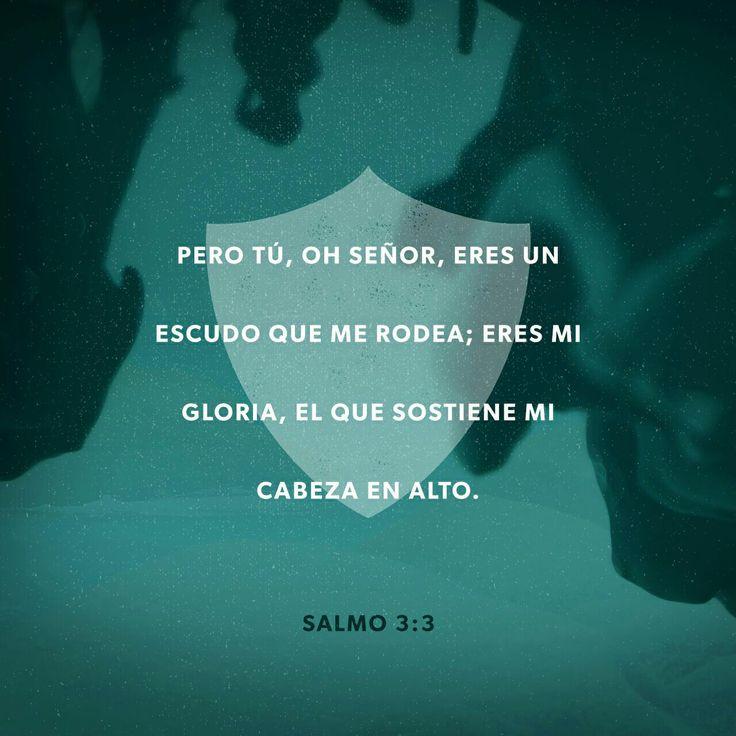 Pero tú, oh S eñor , eres un escudo que me rodea; eres mi gloria, el que sostiene mi cabeza en alto. Salmos 3:3