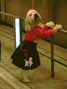 A dog wearing a poodle skirt dressed up like a 50s rock and roll dog! photo by mockstar on Flickr