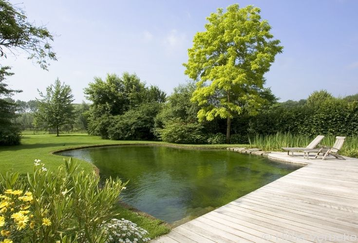 zwemvijver in tuin, losse vorm | De Mooiste Zwembaden