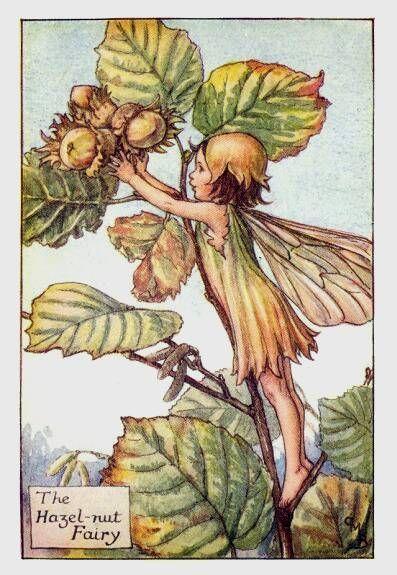 The Hazel Nut Fairy by Cicely Mary Barker