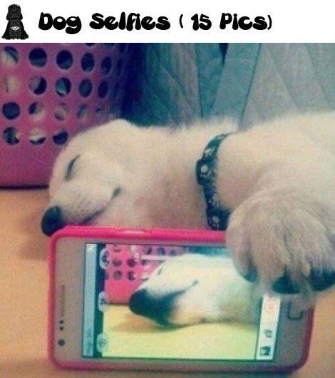 Dog Selfies (15 Pics)