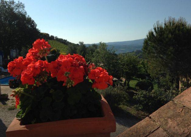 Agriturismo - La Palazzetta di Luca e Flavio Fanti Società Agricola Semplice - Montalcino - Castelnuovo dell'Abate - Siena - Toscana