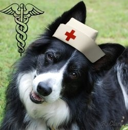 In today's fast paced stressful society, people find themselves unhappy, unhealthy, depressed and lonely. More and more research is showing that...Features Border, Collies Artworks, Border Collies Genius, Favorite Animal, Collies Collection, Border Colliesgenius, Unique Border, Border Baby, Collies Breeds