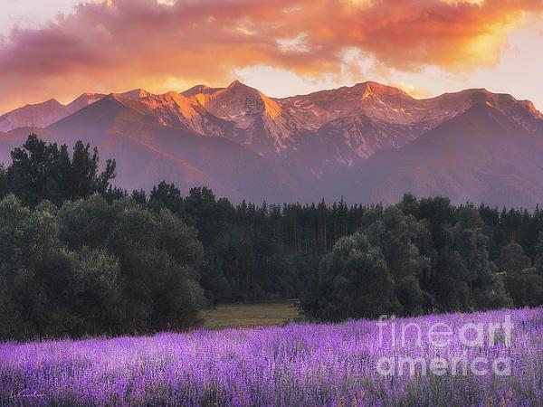 Lavender Landscape Mountain Sunset By Luke Kanelov Landscape Mountain Sunset Mountain Landscape