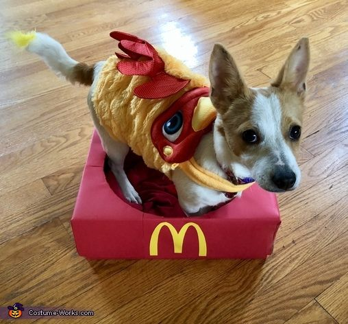 295 best Costume Ideas for Pets images on Pinterest ...
