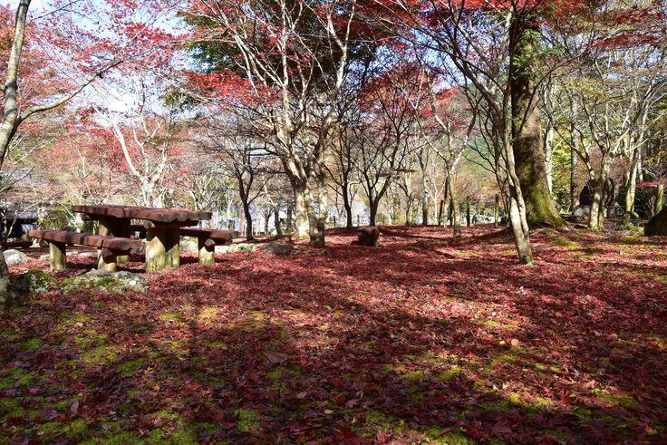 昭和の森会館by天城 2015.11