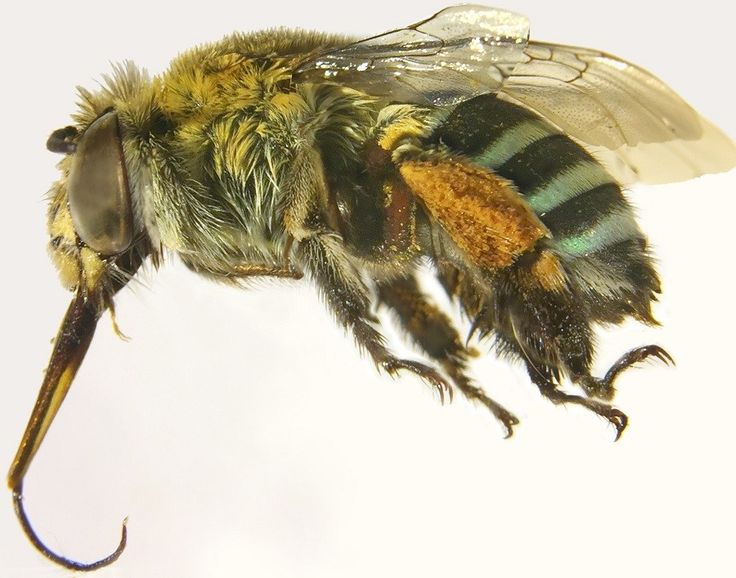 Digital bees help research fly