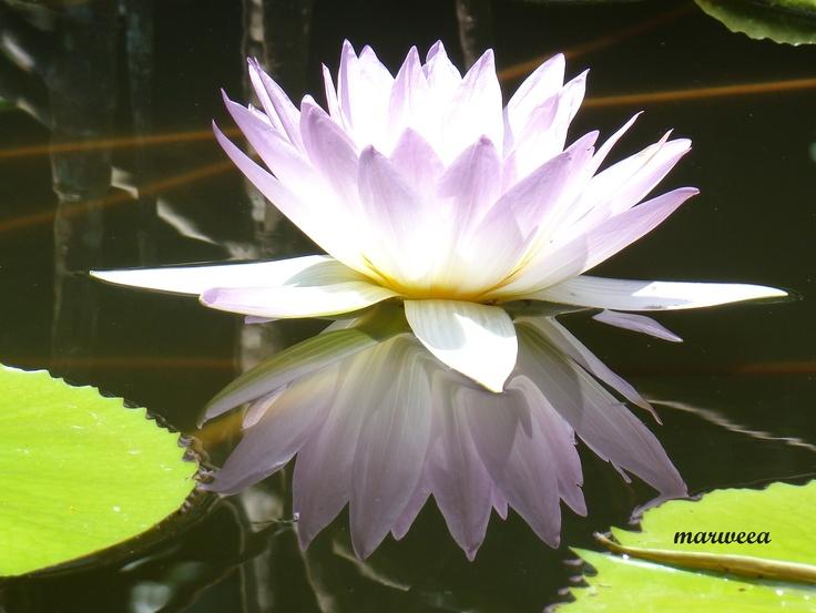 Reflejos @ Vallarta Botanical Garden [110911]