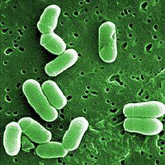 Probiotice | Probiotice pentru animalutul tau