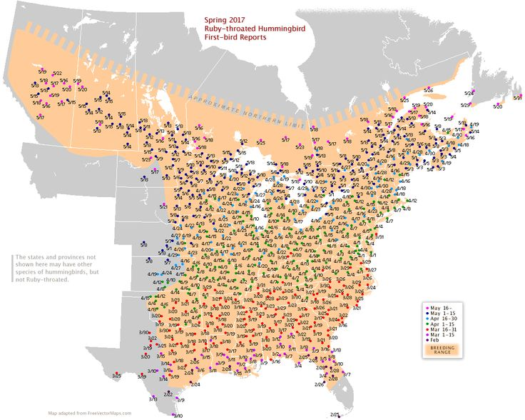 Rubythroated map for North America (With images