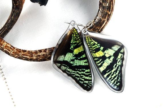 Real sunset moth butterfly earrings