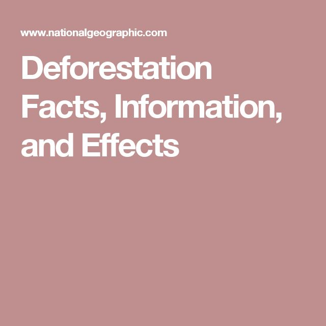 Deforestation Facts, Information, and Effects