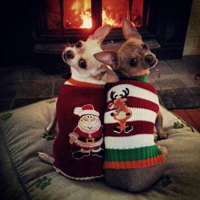Mario and Luigi keep warm by the fire.waiting 4 santa to bring gifts  #dogfordog