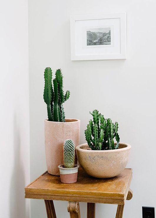 Cactus are IN! photo via sfgirlbay.com