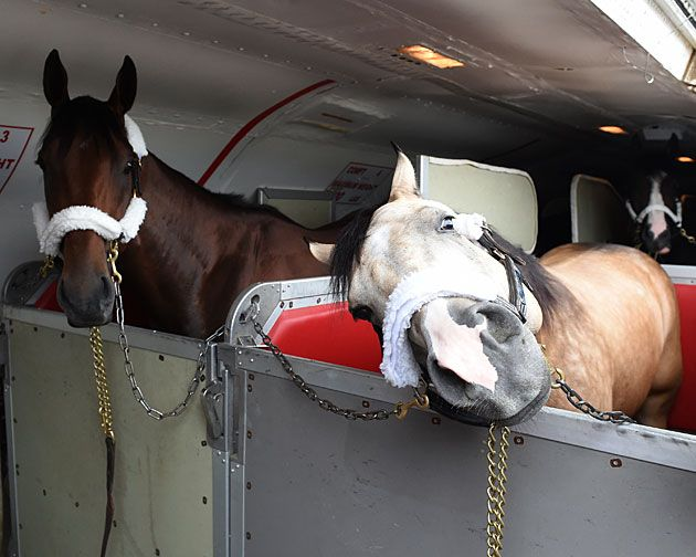 American Pharoah and Smokey Arrive Belmont 2015 - Smokey mugs for the camera