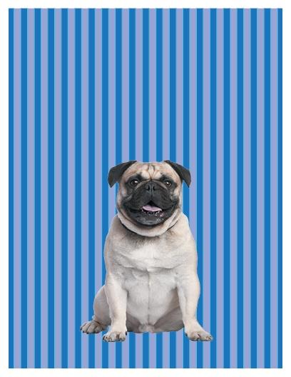 Pug blank note card