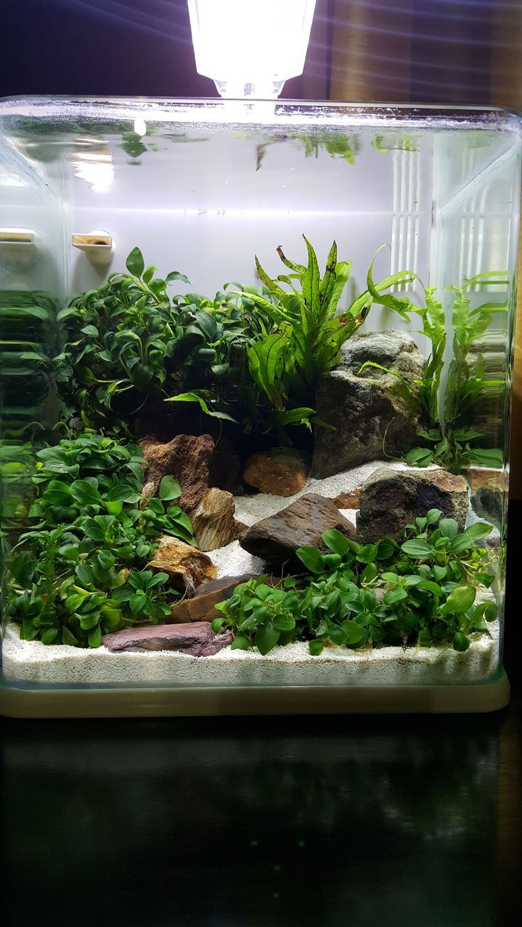 Freshwater aquarium fish melbourne - Underwater Stream Nano Tank