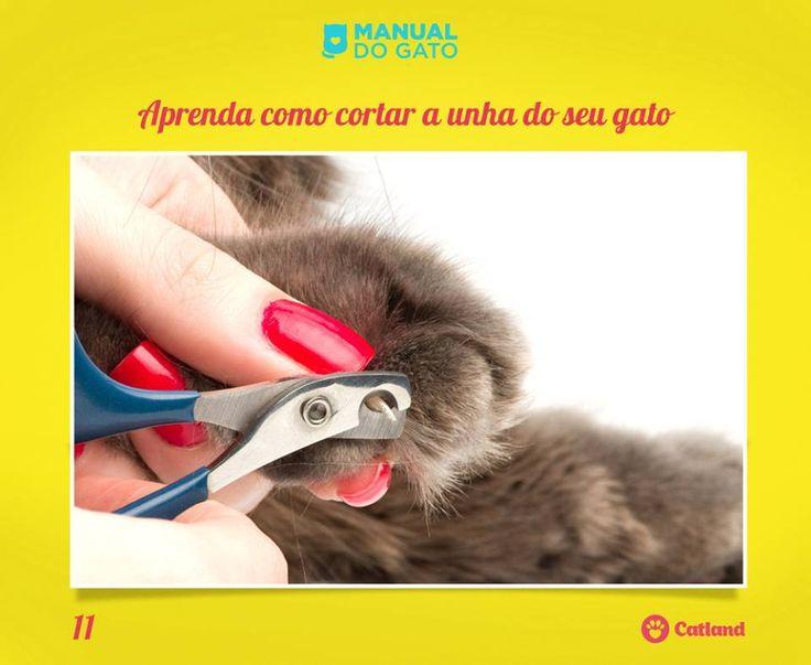 Quer cortar a unha do seu gato e tem medo de machucá-lo? Uma boa dica é tentar quando seu gato estiver sonolento ou dormindo! Saiba mais aqui: http://on.fb.me/1E7vbR9