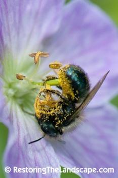 how to keep mason bees