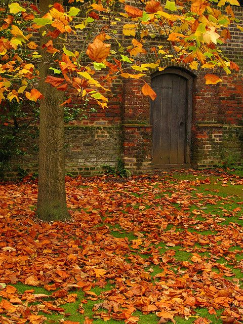 Autumn Leaves in Osterley Park London