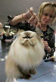 now THAT is a fancy cat