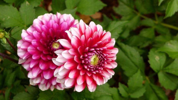 ERNESTO CORTAZAR - JUST FOR YOU - FLOWER FRIENDS