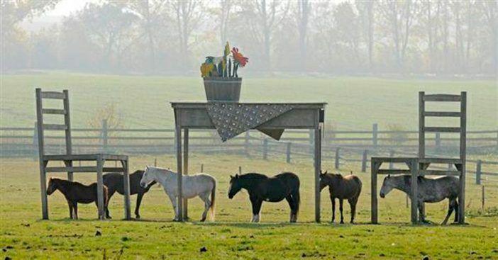 Ein Bauer wollte ein Schutzdach für seine geliebten Pferde bauen. Gemeinde sagte: Nein! Dies tat der Bauer danach... - DIY Bastelideen