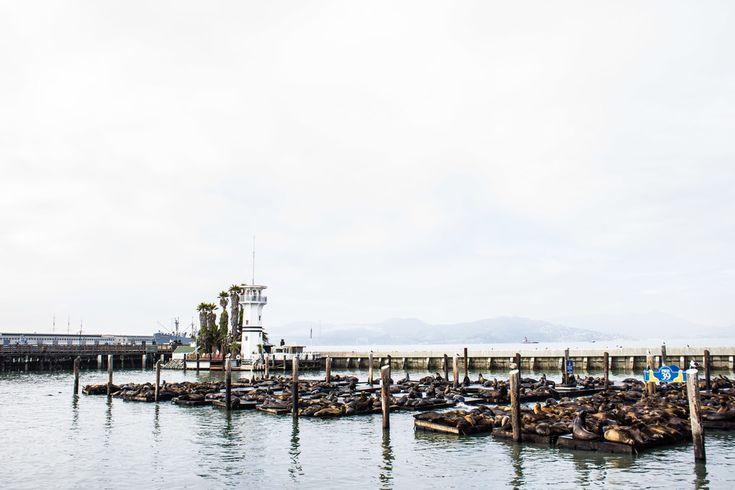 pier 49 / san francisco / reality and retrospect