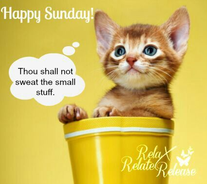 Image result for have a beautiful sunday cats