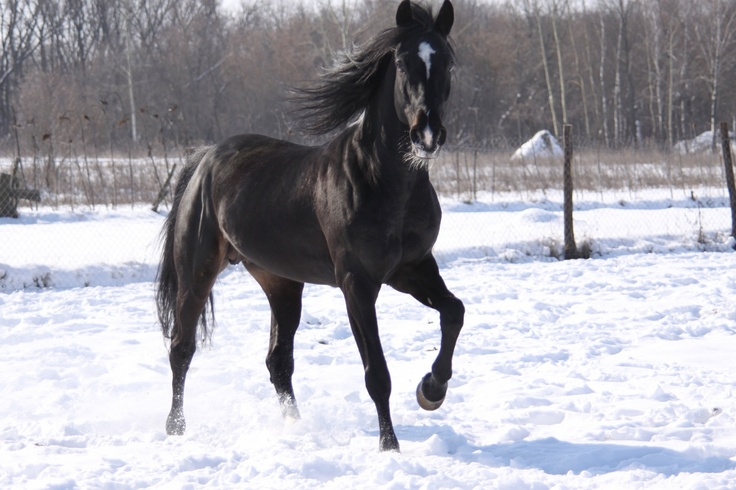 Amo cavalos de cor preta