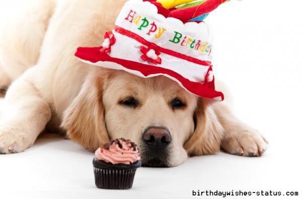 Marvelous Birthday Wishes For Dogs Dog Birthday Dog Birthday