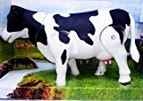 "Milk Cow Moving Legs & Shake Tail Make Sound Big Size 12"" Toyby SahiBUY1358% Sales Rank in Toys & Games: 204 (was 2976 yesterday)(47)Buy: Rs. 371.007 used & new from Rs. 270.00 (Visit the Movers & Shakers in Toys & Games list for authoritative information on this product's current rank.)"